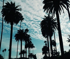 Palms and BlueSkies